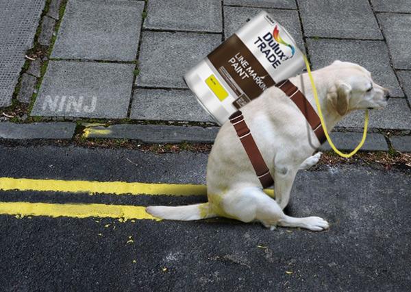 jobs involving dogs